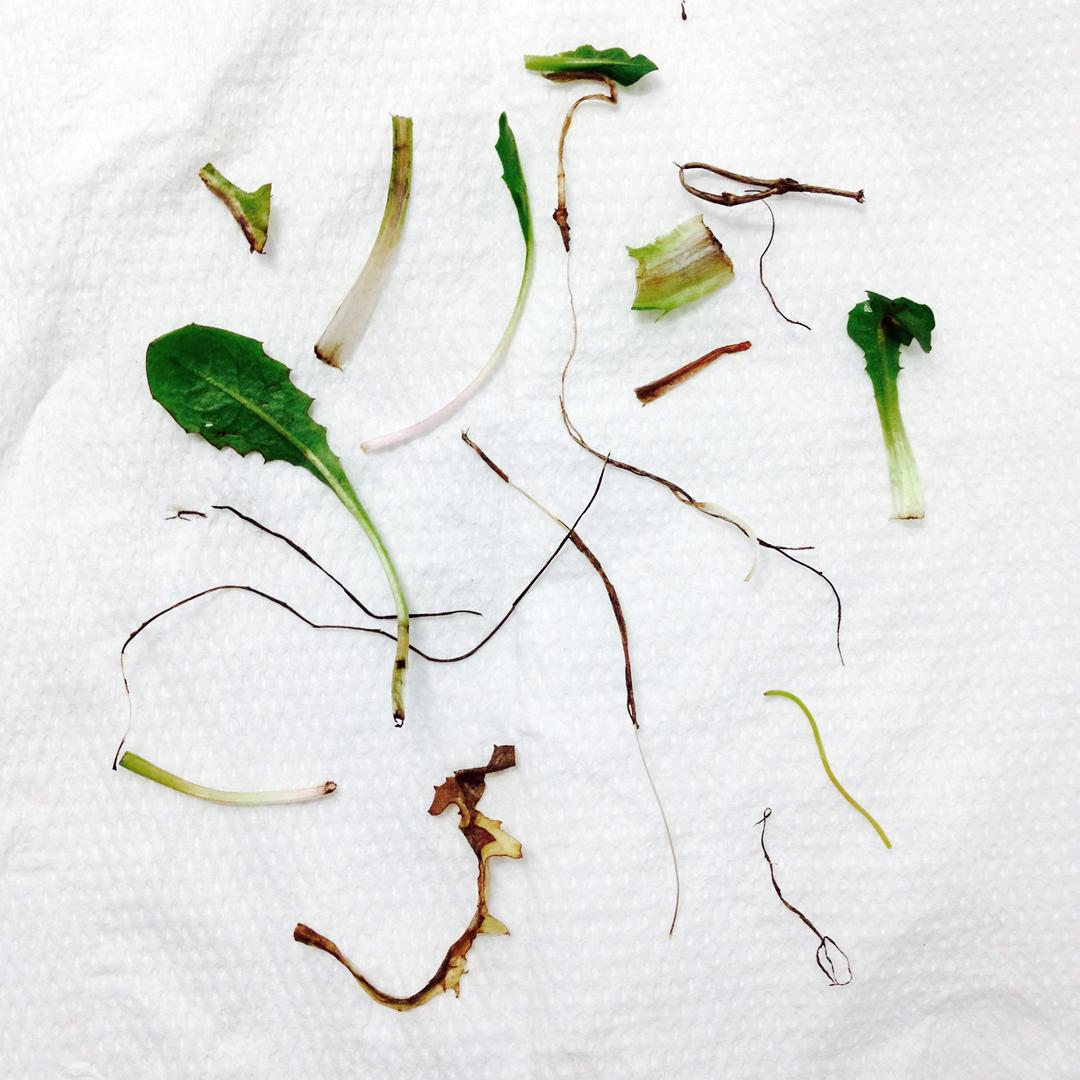 botanica-resti-web