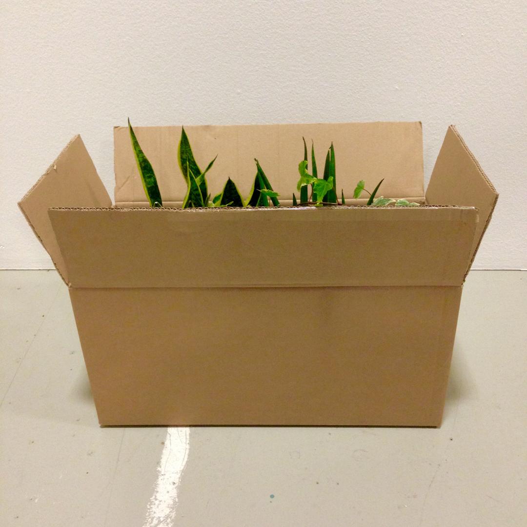 piante-box-studio-milano-web